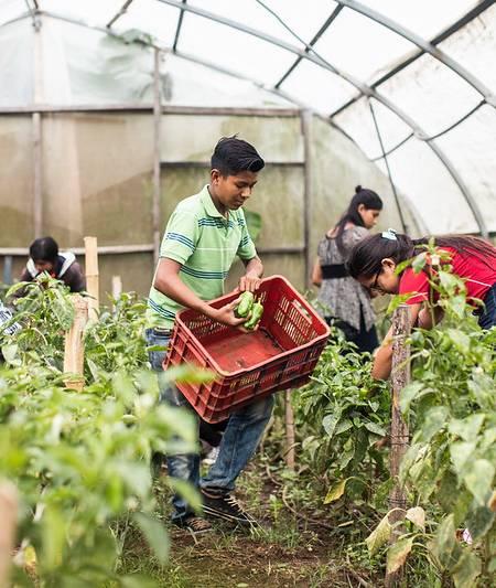 joven trabajando en el huerto